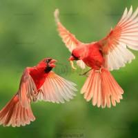 دانلود رایگان تصاویر استوک پرنده
