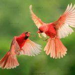 تصاویر استوک پرنده